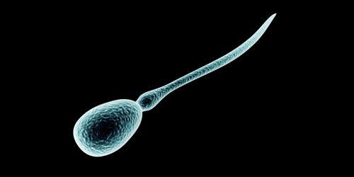 spermiekvalitet